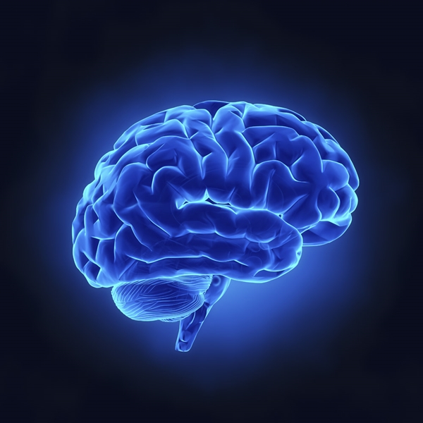 20岁就开始健忘?科学家发现:13岁后记忆神经已不再生长