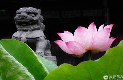 为什么佛菩萨都坐在莲花上?