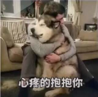 [FUN来了]狗年第一惨案|连电饭煲都有对象了