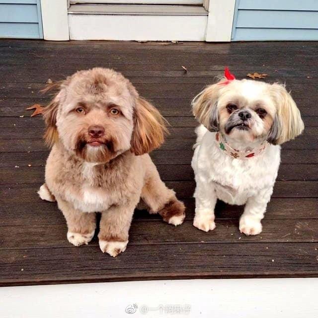 [FUN来了]可怕!这只狗长了一张人脸