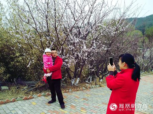 梅好李沧相约早春 北方最大鉴赏梅园迎来最美花