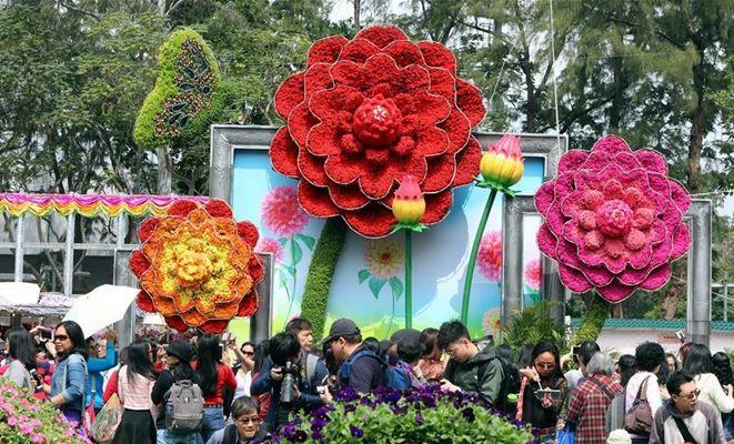 香港:又到一年赏花时