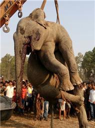 印度4头大象被火车撞飞