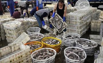 休渔前的水产市场