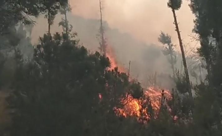 天猫家装节活动方案大理苍山发生森林火灾 730人正全力扑救
