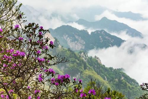 尧山风景区邀你避暑纳凉、赏高山杜鹃花海、看奇幻星空