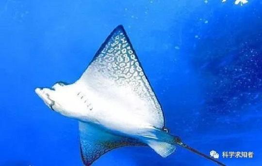 世界上最危险的鱼,食人鱼第五,榜首是它,你听说过吗?