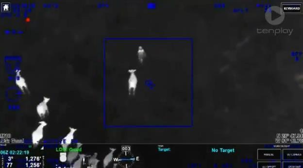 偷车贼藏进田野躲警察 被一群正义奶牛逮捕