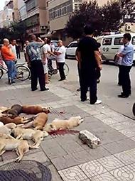 西安街头多只流浪狗被打杀