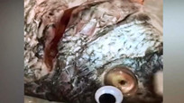 """鲜鱼易变质怎么办?科威特一商店给鱼戴""""美瞳"""""""