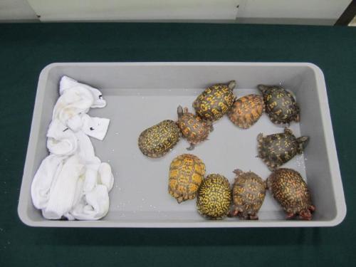 香港海关与渔护署查获市值1900万港币濒危物种