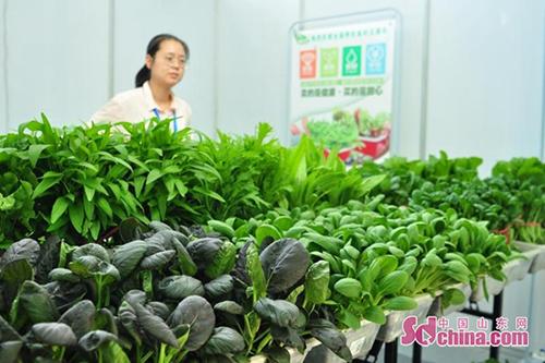 食在平度 首届全国养生食材交易会开幕