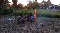 柬埔寨小孩把变色龙烤熟捣碎拌着芒果丝吃,生活艰苦