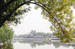 一场秋雨一场凉 津城16日最高气温15℃ 体感阴冷