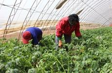 陕西农民工返乡创业人数累计达48.1万人