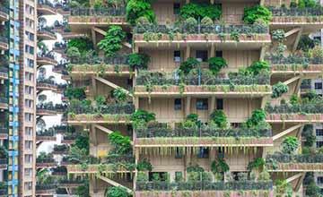 """这个小区家家户户阳台有""""一座森林"""""""