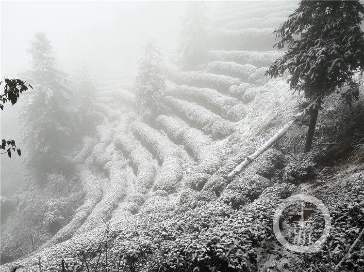 江津四面山落雪 望乡台瀑布被冰封