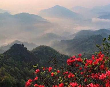 安徽霍山:四月屋脊山 云端上的映山红