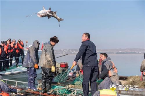 洛阳市第四届陆浑开渔节场面火爆
