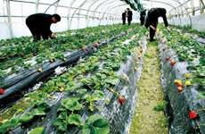 安康成立全省首个地级市农业科技创新联盟