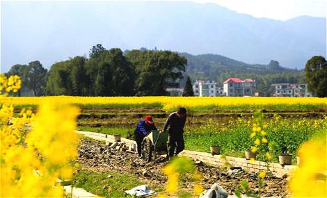 安福:春来处处农耕忙