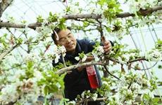 中国杨凌示范区:现代化农业大棚展现新技术