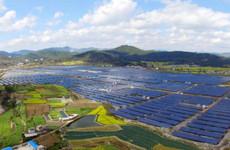 陕西国企合力团:助力贫困地区形成区域性主导产业