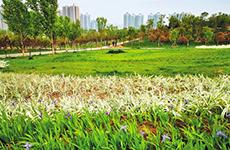 柳青精神感召 西安城南崛起一座现代化新区