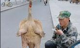 老大爷街头卖大块头甲鱼,男子好奇走近一看,却差点骂出了声