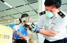 陕西发布公告 符合免于隔离检疫条件的宠物可入境
