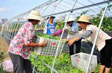 携手农民抱团闯市场 陕西农民专业合作社助推产业振兴