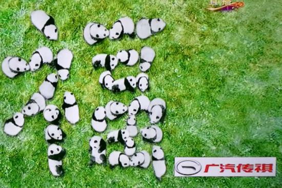 转发这群萌萌哒熊猫