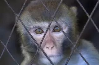 【逆闻】让猴子吸尾气搞测试,四家车企被谴责