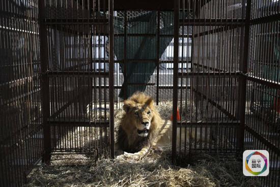 前往非洲家乡,将在一处野生动物保护中心回归大自然