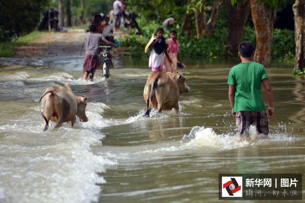 大约80%的保护区遭遇洪灾,救援人员展开动物救援行动.