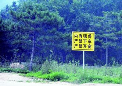 八达岭野生动物园 老虎袭击俩女游客