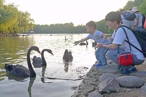 """夜探野生动物园围观小动物如何""""避暑"""""""