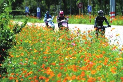 花海自行车风景图片