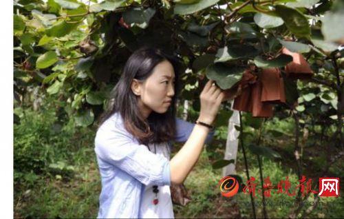 电风扇欧巴桑下集打破进口猕猴桃垄断高端市场的局面