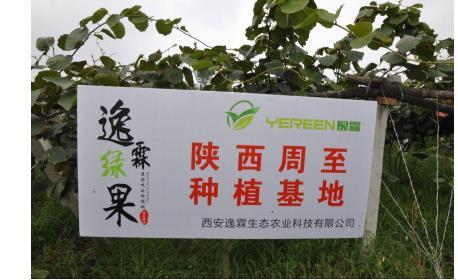 养生专家投身农业创业 立志打造国产猕猴桃第一