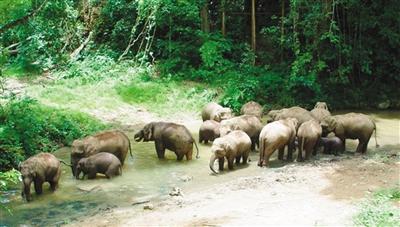 野象谷:西双版纳最大的野生动物救助站