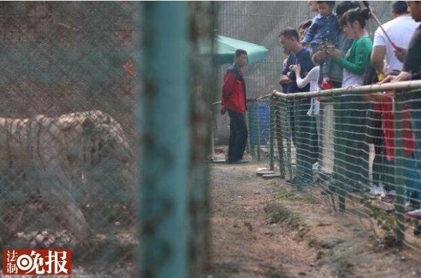 八达岭野生动物园东北虎园仍关闭
