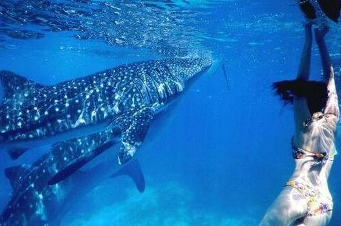 世界上最可爱的鲨
