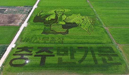 7月26日,韩国忠清北道忠州市,巨幅潘基文肖像画现身稻田。(图片来源:韩国NAVER网页截图)