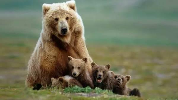 动物保护组织和贝爷