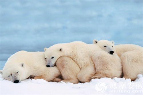 的冬三月 看小动物如何冬眠