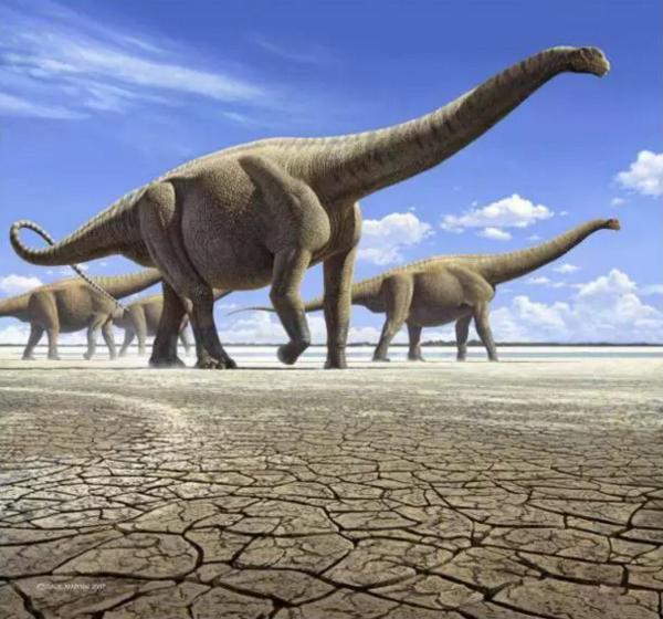 壁纸 大象 动物 恐龙 600_560