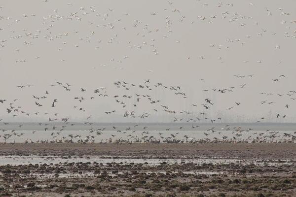 中国最大的淡水湖在缩小,解决方案面临争议