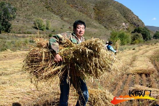工作组成员帮助村民收秋。驻村工作组供图