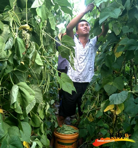 帮助村民采摘蔬菜。驻万全赐沟村工作组供图